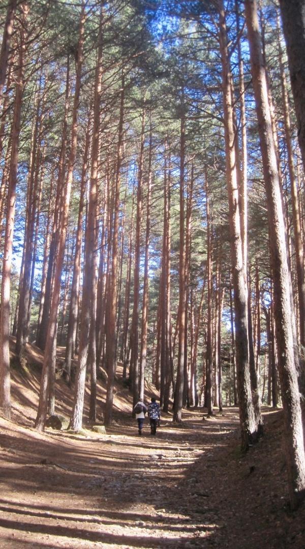 dos-formas-de-ver-una-excursion-sendas-del-valle-de-la-fuenfria-3