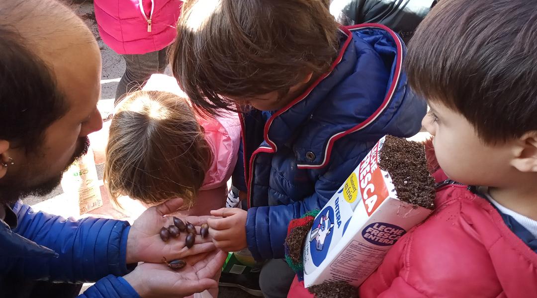 Plantando bellotas