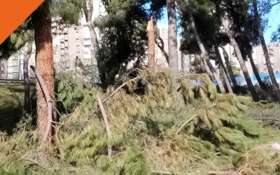 Ruta por los árboles afectados por la nevada en Moratalaz