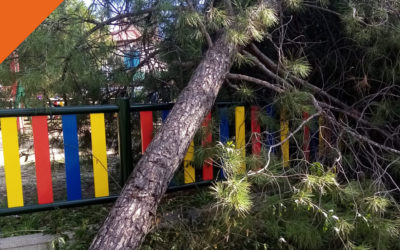 Ruta de los árboles rotos