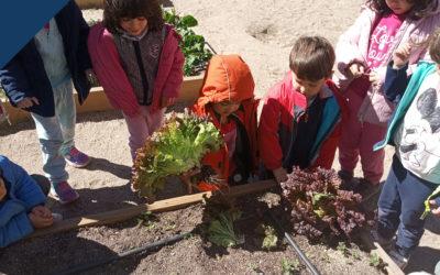 Recolectando los productos de nuestro huerto